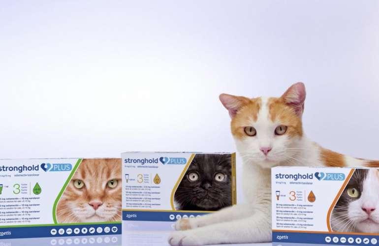 Капли stronghold от блох для собак и кошек