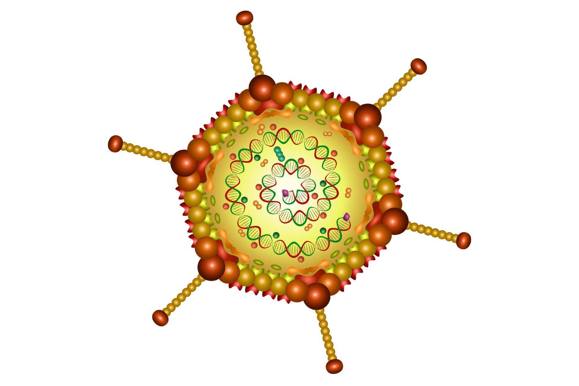 Симптомы и методы лечения аденовирусной инфекции у детей