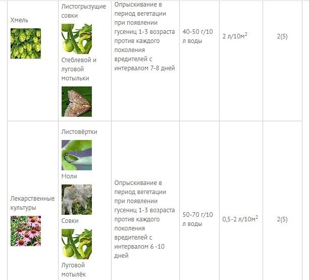 Битоксибациллин — смерть для «надоедливых» насекомых
