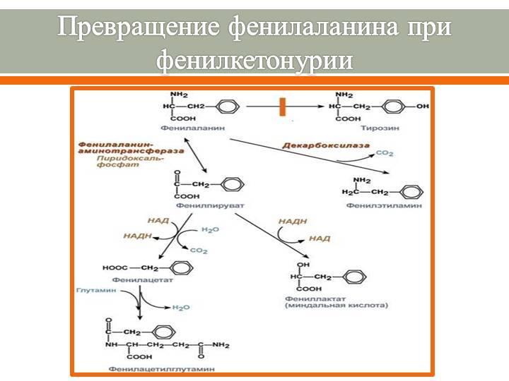 Фенилкетонурия как результат нарушения метаболизма фенилаланина и схожие заболевания