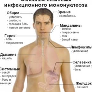 Болит под ребрами слева что там находится