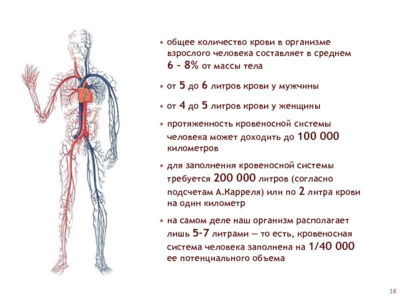 Кровь и лимфа – это ткани внутренней среды организма, представляют собой разновидность соединительной ткани