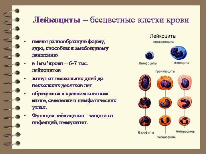 Внесосудистые жидкие среды, их роль в организме. лимфа, ее состав, функции