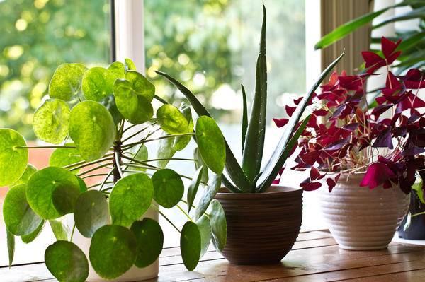Современные препараты для здоровья комнатных растений