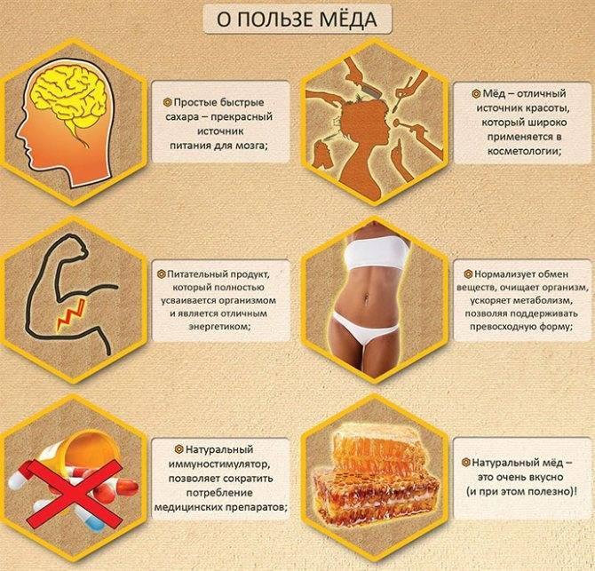 11 полезных продуктов пчеловодства и их целебные свойства