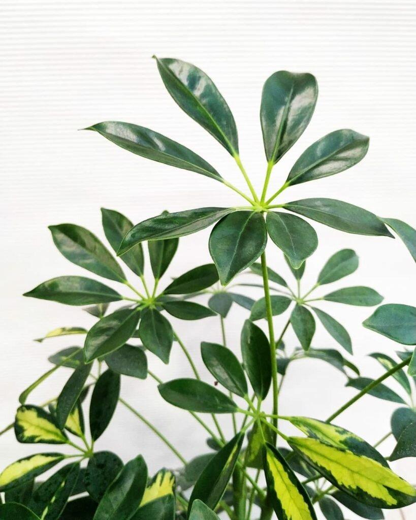 Лучшие комнатные растения, очищающие воздух дома