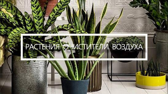 """Горячая банька для """"зеленого друга"""". учимся делать горячий душ для комнатных растений"""