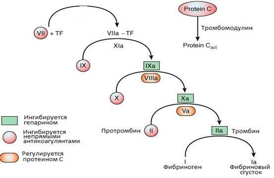 Форменные элементы кровии и их нормы