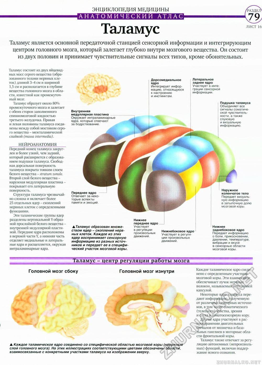 5 зон мозга – подборки от постнауки
