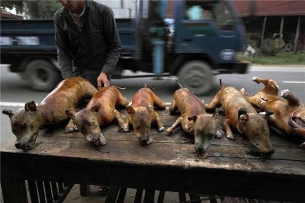 Собачье мясо от туберкулёза: помогает ли в излечении?