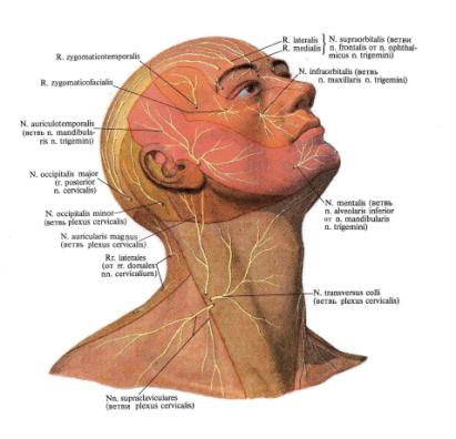 Болит затылок головы: причины боли, что делать с ней