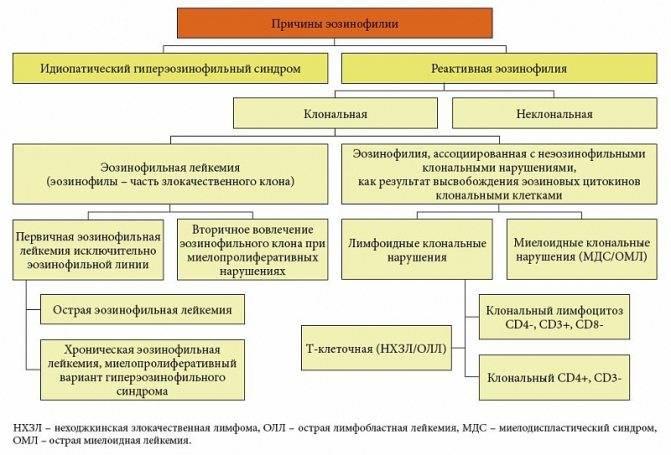 Немного о повышенных эозинофилах