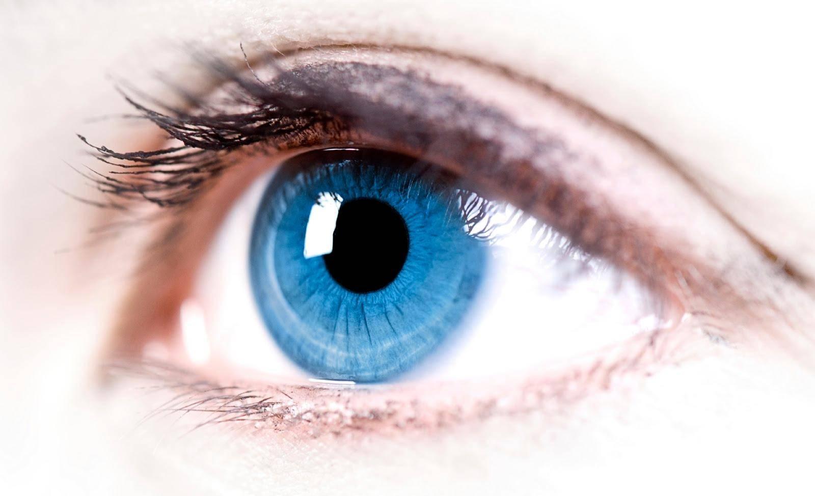Продукты полезные для зрения: список самых полезных продуктов для глаз