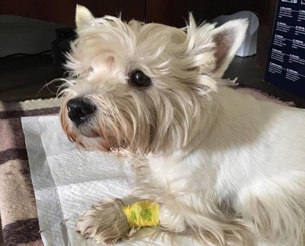 Лечится ли туберкулез собачьим мясом