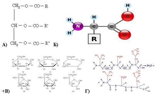 Углеводы. функции углеводов 1. энергетическая. основная функция углеводов заключается в том, что они являются непременным компонентом рациона человека, - презентация