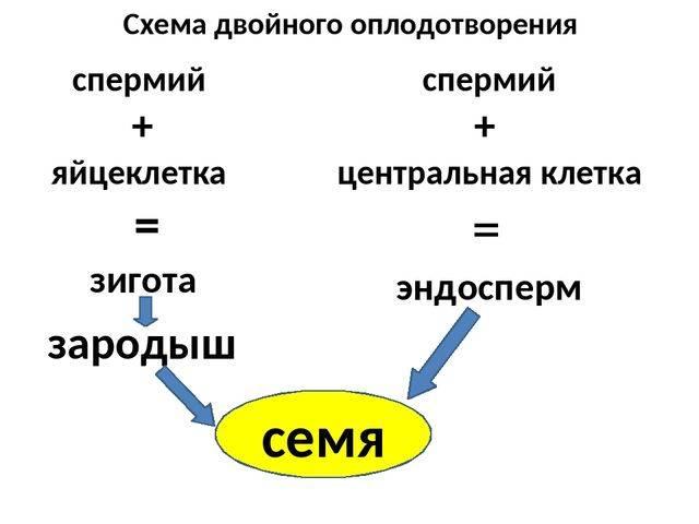 § 55. органы размножения. половые клетки. оплодотворение