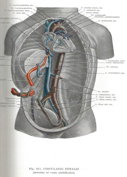Открытое овальное окно в сердце у новорожденных: опасно ли это, диагностика, лечение