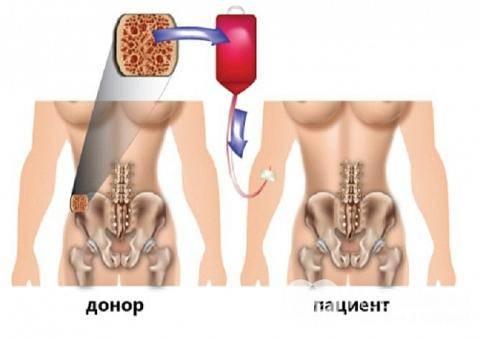 Гемоцитопоэз и его регуляция