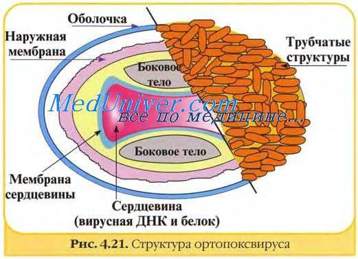 Выдержка из руководства по иммунологии. - запись пользователя елена титова (id1758099) в сообществе мы против прививок! в категории полезная инфа - babyblog.ru