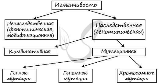 Мутации -  биология егэ