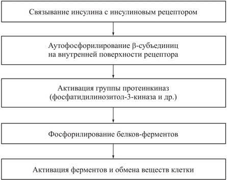- поджелудочной железы - биохимия