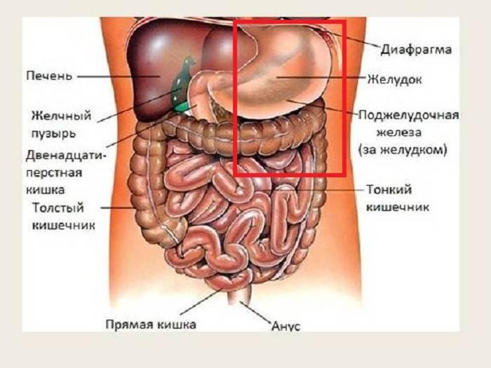 Что находится слева под ребрами и что может там болеть