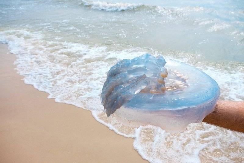 Укус медузы: симптомы, последствия, чем лечить