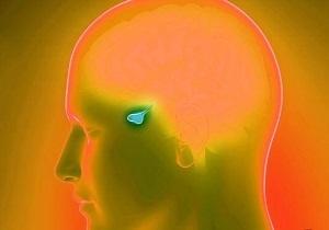 Анализ крови на актг (адренокортикотропный гормон). признаки повышения и снижения гормона, норма по возрасту, методика определения. как подготовится к тесту? :: polismed.com
