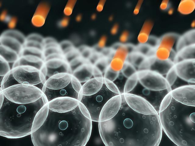 Кверцетин: польза и вред, применение