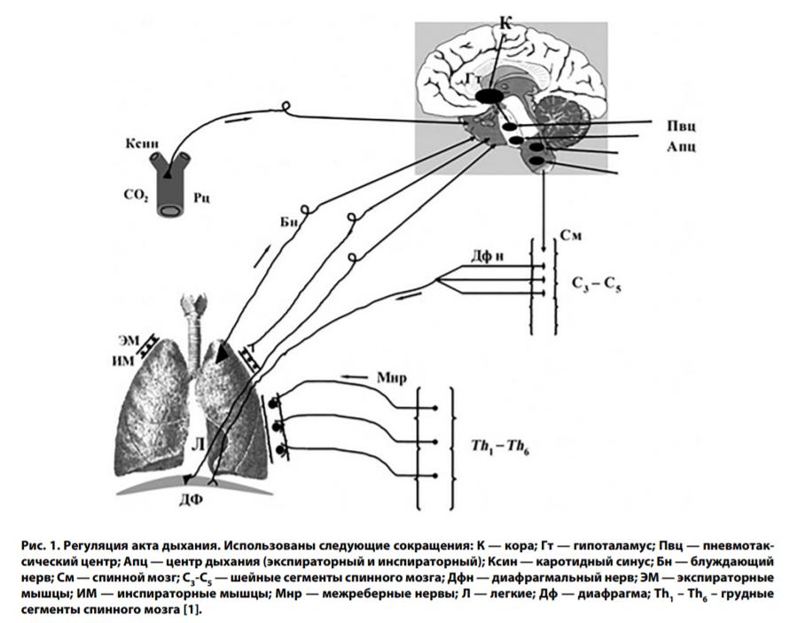 Симптомы пневмонии и причины возникновения
