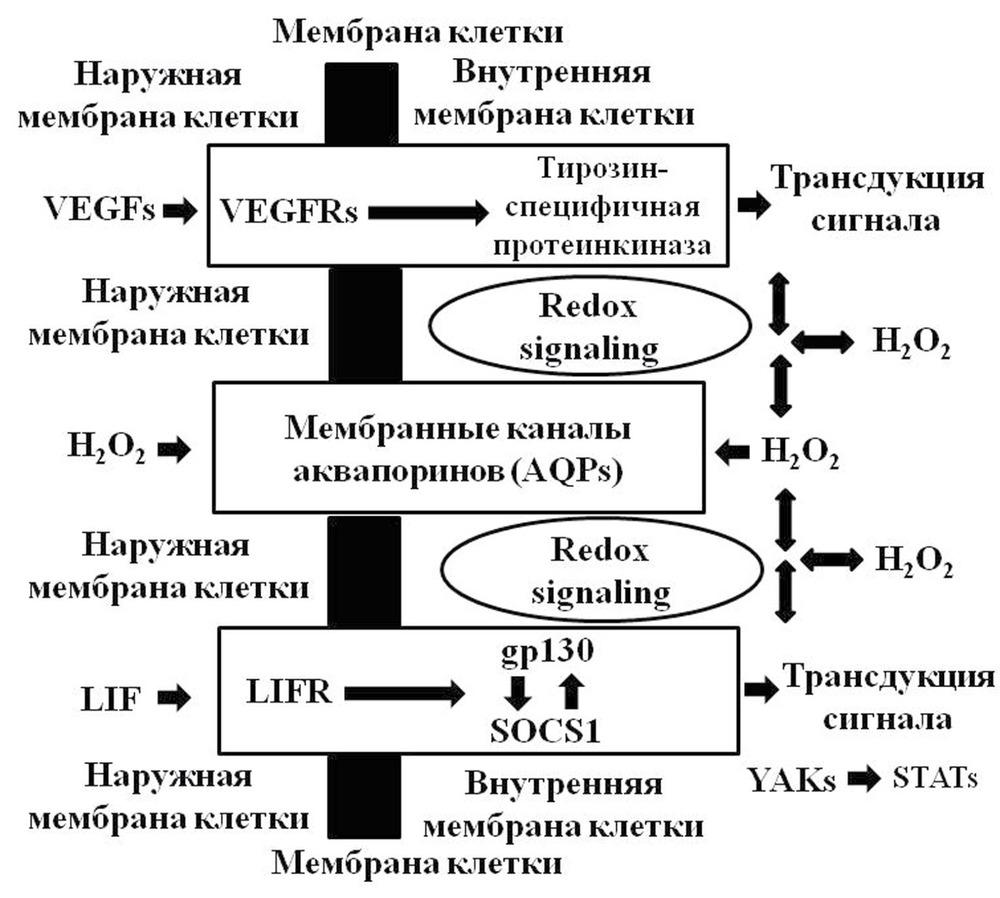 Диагностика полипа эндометрия