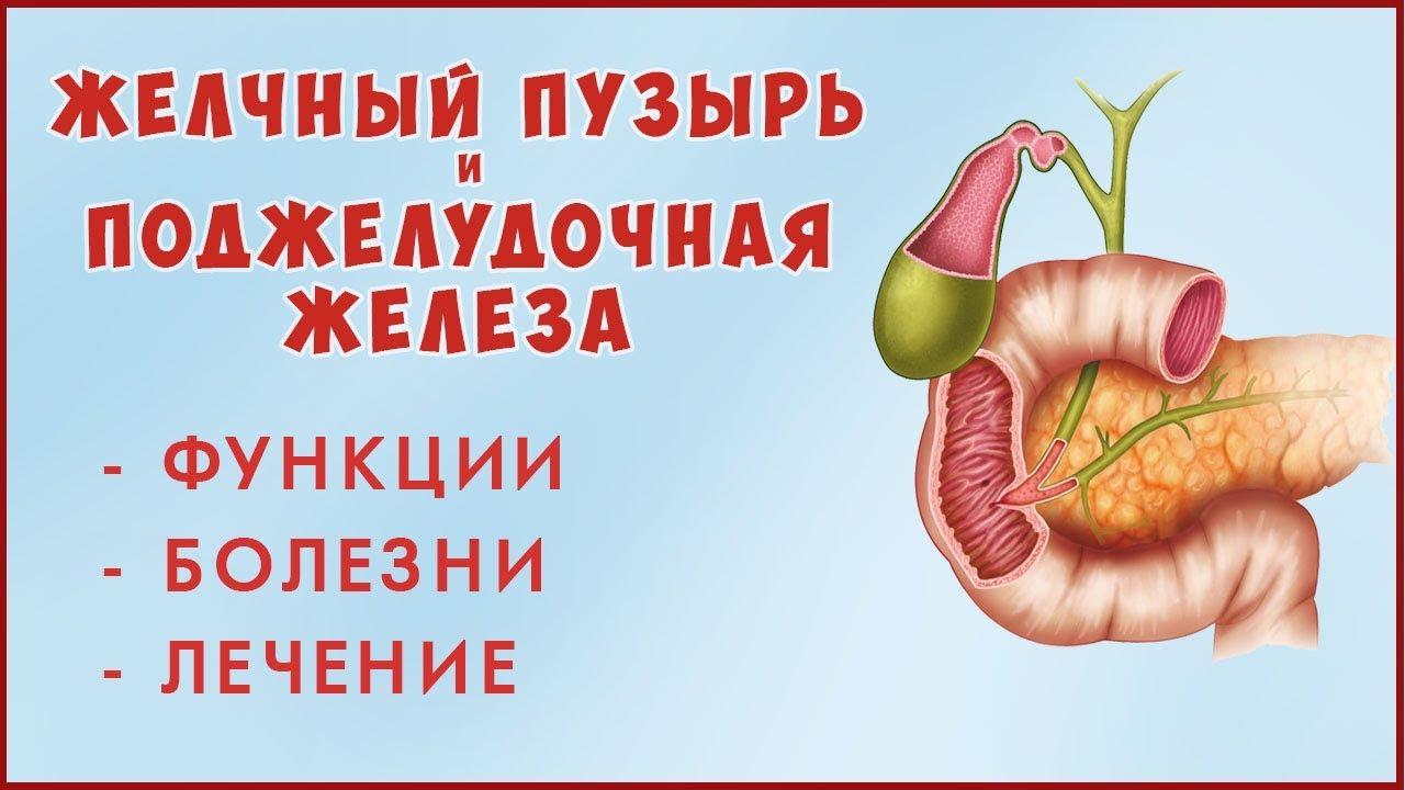 Печень желчный пузырь поджелудочная железа лечение