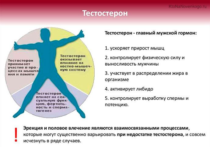 Тестостерон: что это такое, функции, норма, коррекция