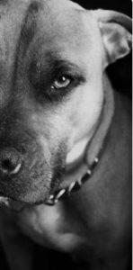 Отравление изониазидом и тубазидом у собак: как уберечь питомца