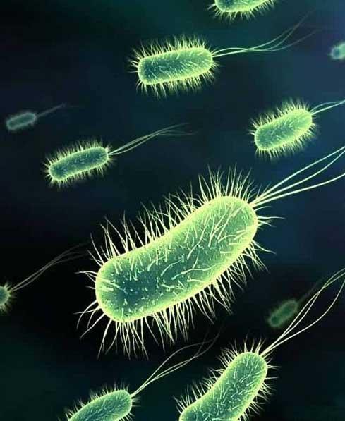 Классификация групп патогенности: все микроорганизмы по местам