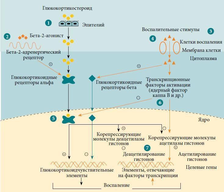 Причины и механизм развития астмы, факторы риска и возможные триггеры