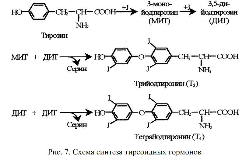 Адренокортикотропный гормон — википедия. что такое адренокортикотропный гормон