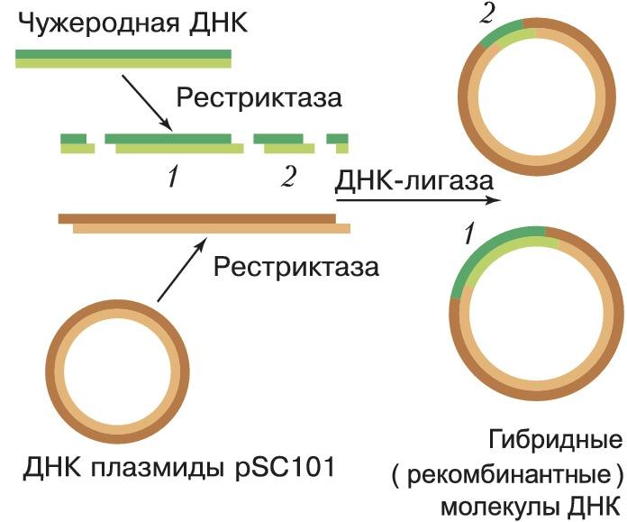 Генная инженерия в борьбе с гемофилией