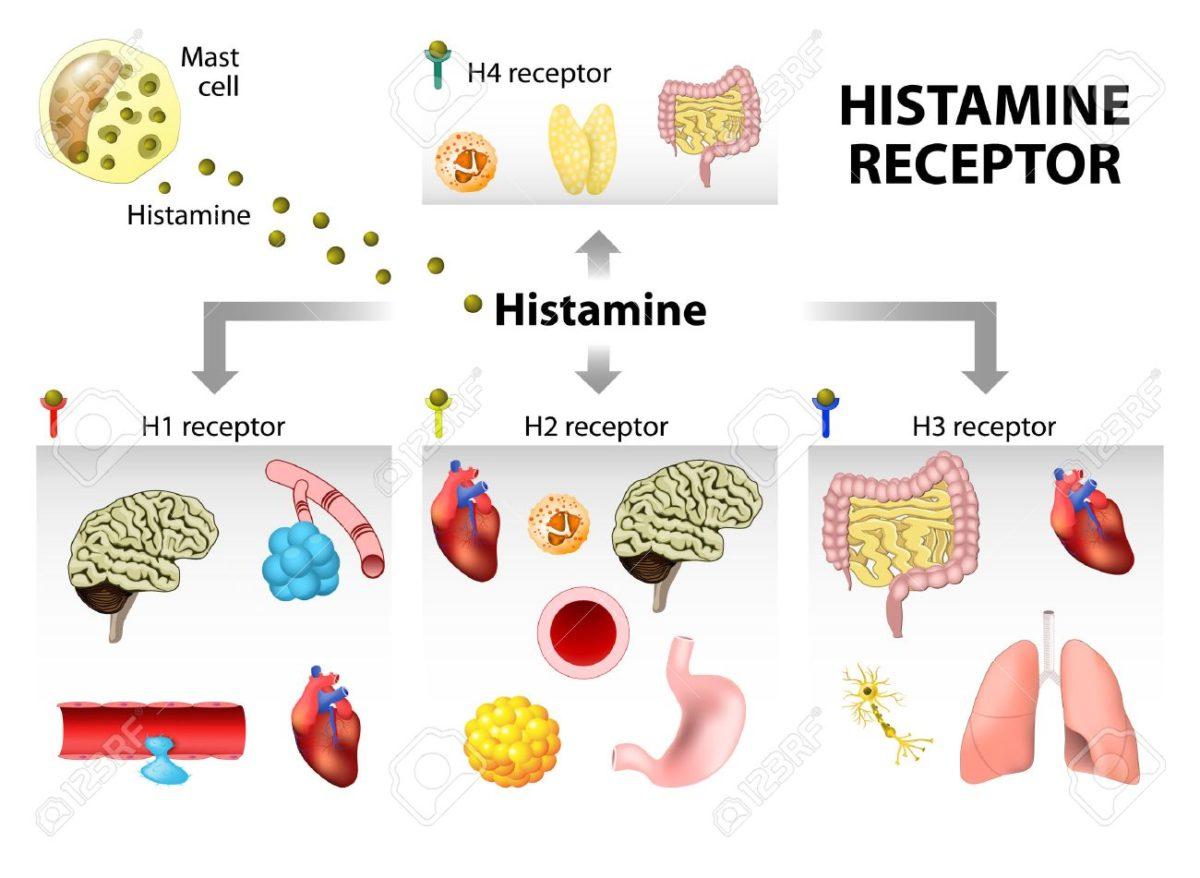 Гистамина гидрохлорид - инструкция по применению, 1 аналог