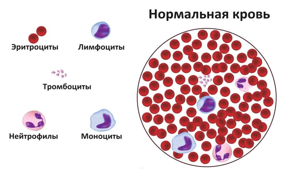 Лимфоциты — википедия с видео // wiki 2