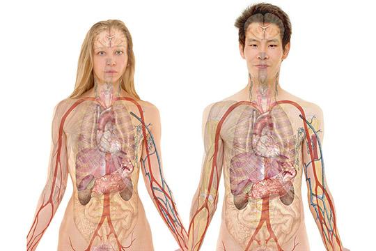 Нефроптоз (опущение почек). причины, симптомы, признаки, диагностика и лечение патологии