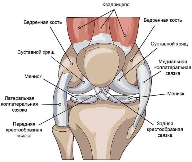 Самое важное про растяжение связок коленного сустава: симптомы и лечение