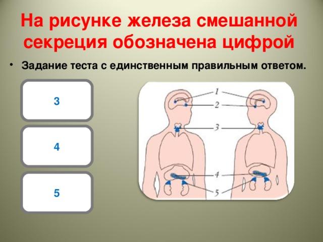 Роль желез внутренней секреции в организме человека