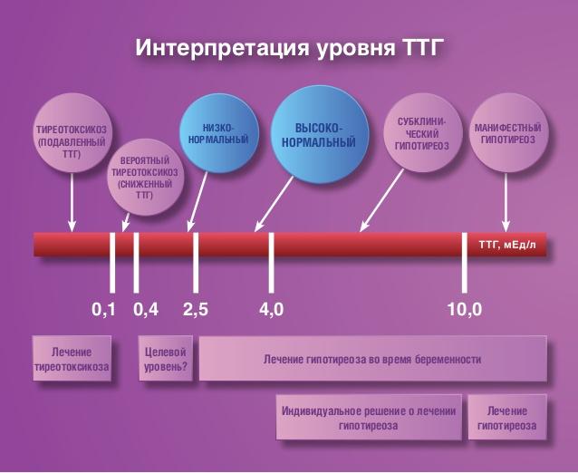 Нормы гормонов щитовидной железы у женщин (таблица)