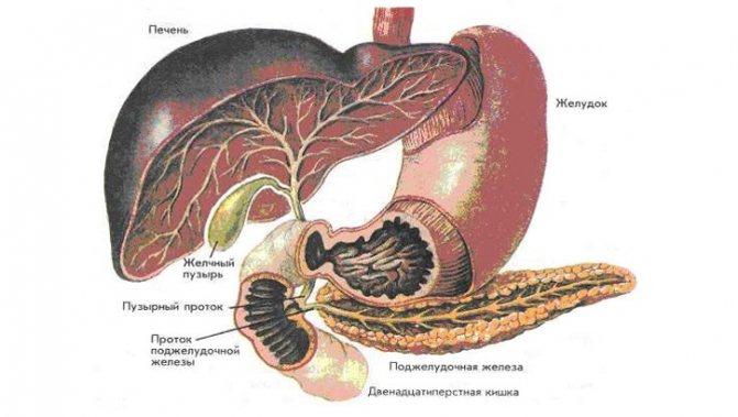 Причины возникновения и симптомы холецистита и панкреатита