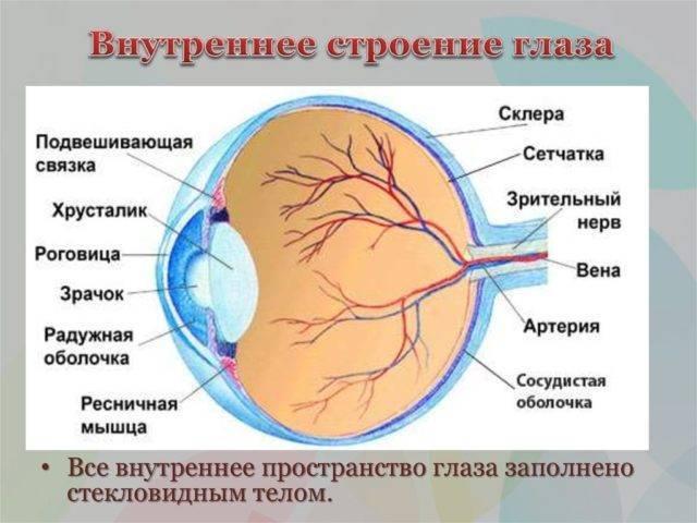 Лютеин-комплекс для глаз: инструкция по применению, состав, аналоги Oculistic.ru