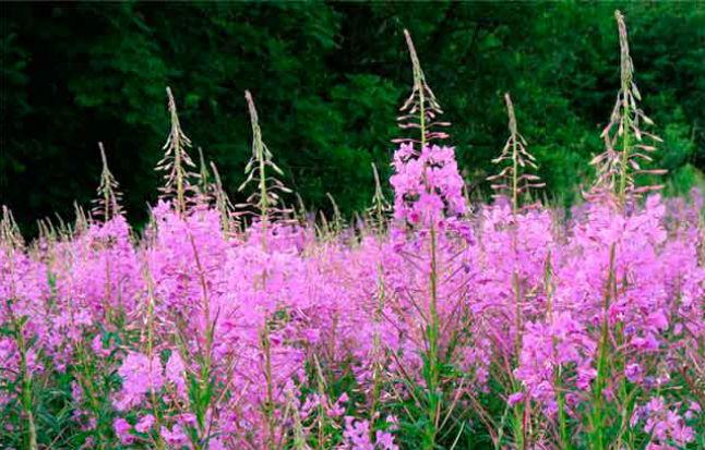 Какие травы можно потреблять при беременности