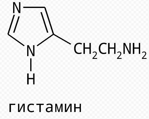 Значение гистамина в функционировании организма