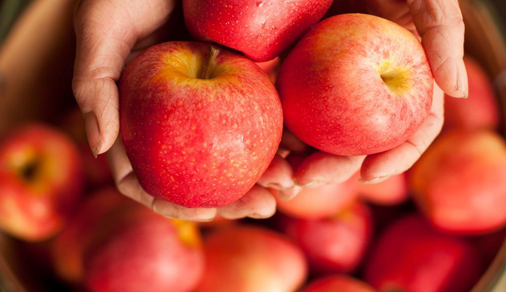 Сладкие яблоки для похудения