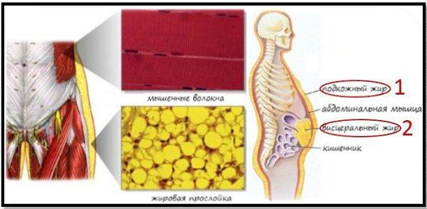 Как убрать живот после кесарева сечения: эффективные упражнения, правила питания, косметические процедуры